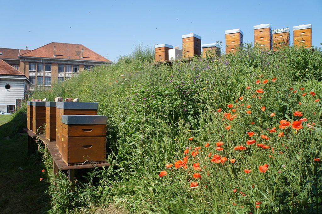 photos des 13 ruches de Supméca avec le bâtiment historique en arrière plan
